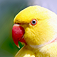 Parrots Slideshow & Wallpapers (HD)